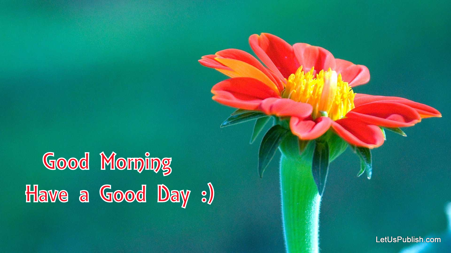 cute-good-morning-flower-wallpaper