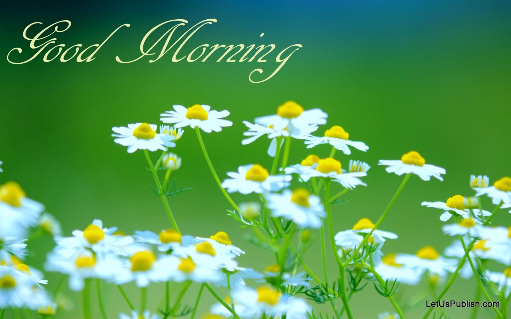 Good Morning Flowers Wallpaper