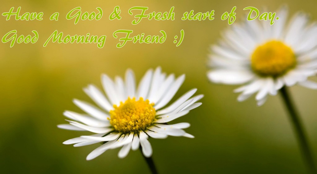 Good Morning Friend Wallpaper Download