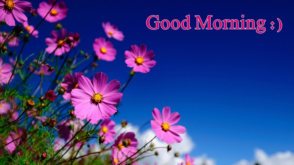 Good Morning HD Flowers Wallpaper Download