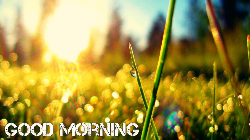 good morning wallpapers free download let us publish