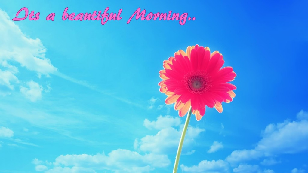 HD Pink flower and blue sky Good Morning Wish Wallpaper