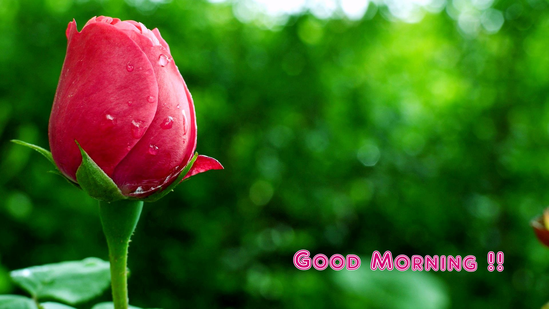 1920 x 1080 jpeg 167kB, Good Night Rose Hd Images | New Calendar ...