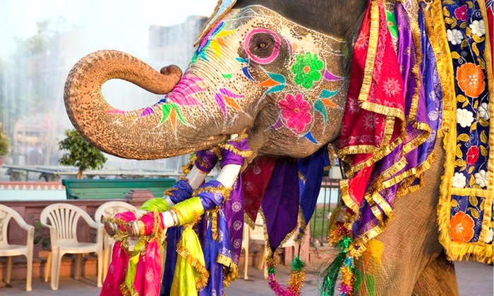 Amazing Holi Colorful Elephant photos