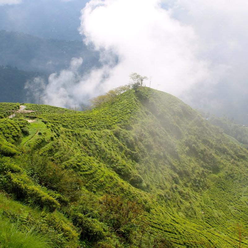 Darjeeling City View For Travelers