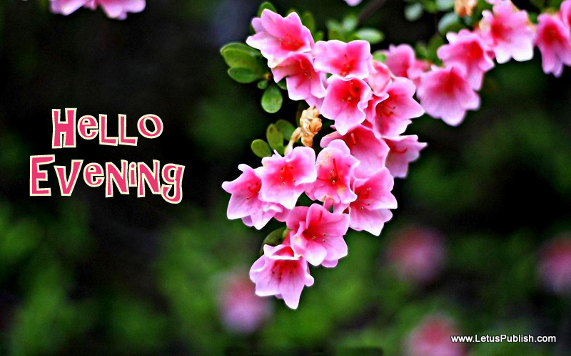 Feel Fresh Good Evening Wallpaper Floral Images