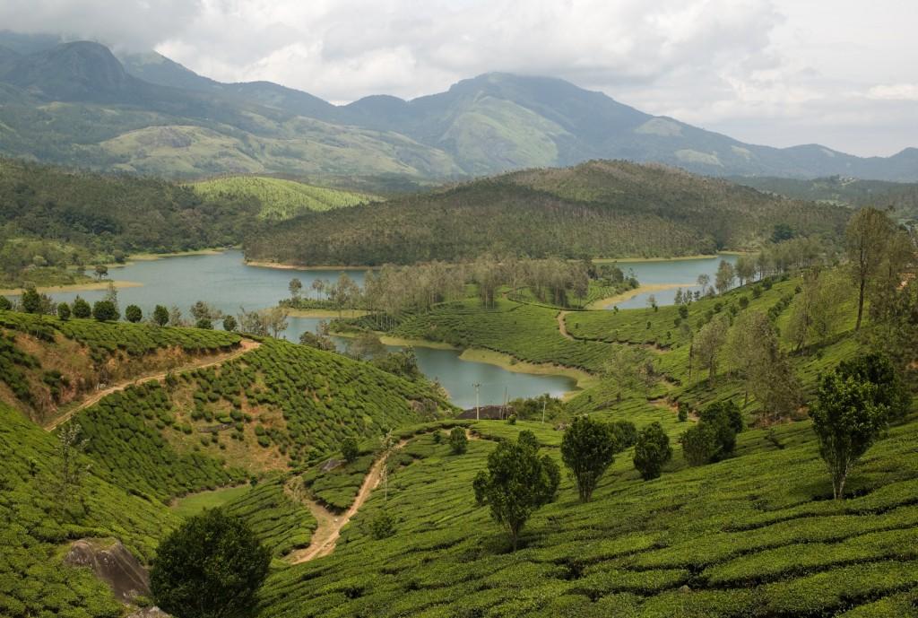 Yela Giri - Tea gardens