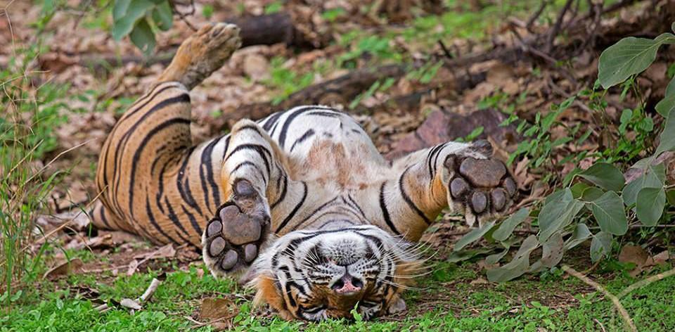 Unexplored Wildlife Destinations of India