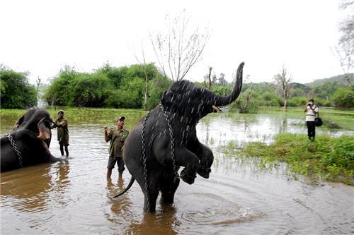 Sakrebyle Elephant Camp