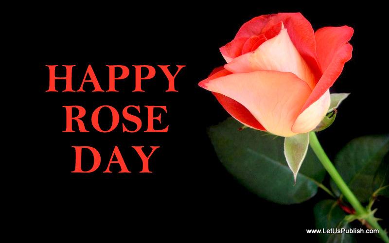 beautiful rose day wallpaper hd