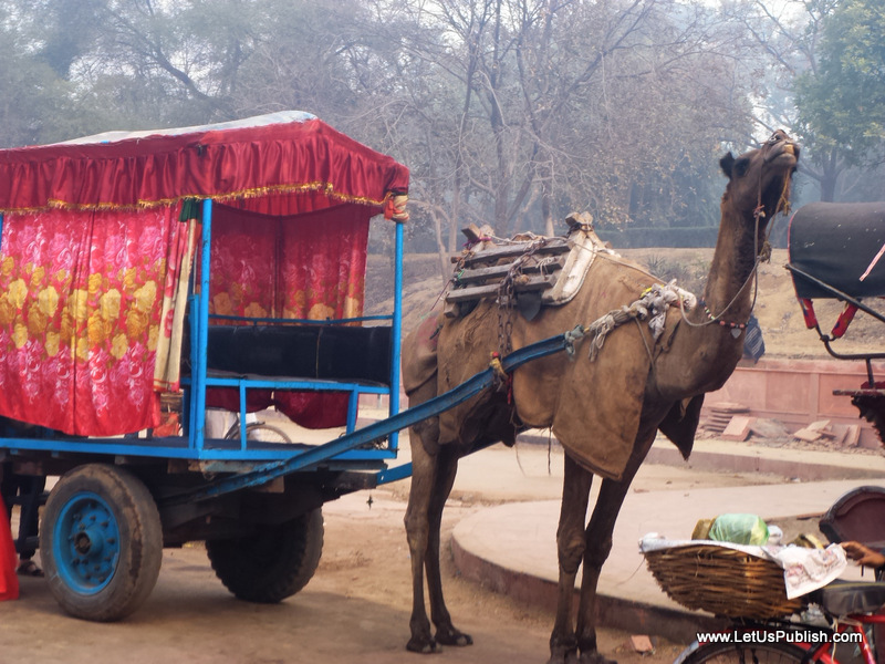 Camel Pics, Taj Mahal Agra