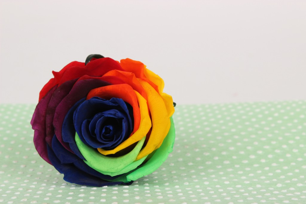 Rainbow Preserved Rose