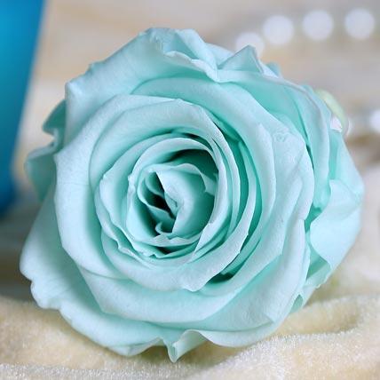 Sky blue Forever Rose