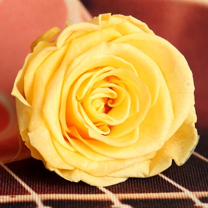 Yellow Forever Rose