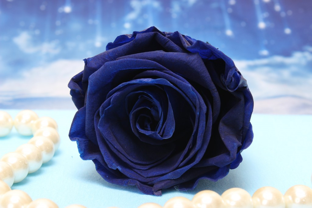 electric blue Rose Gift