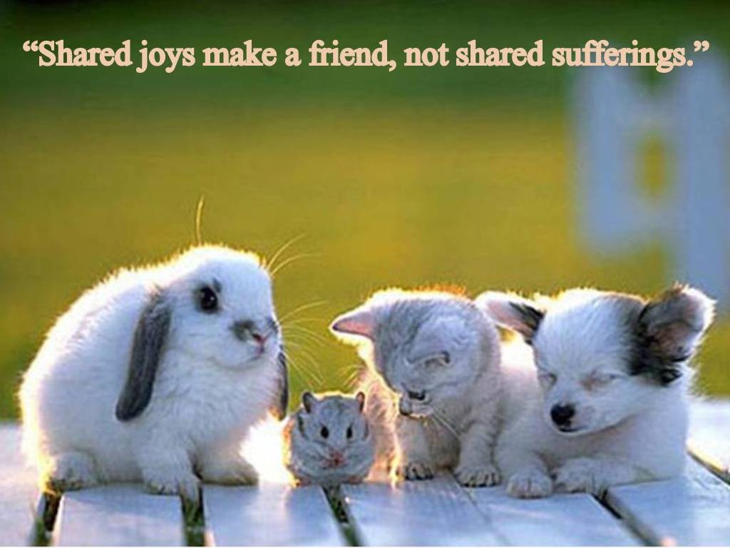 Cute friendship wallpaper download