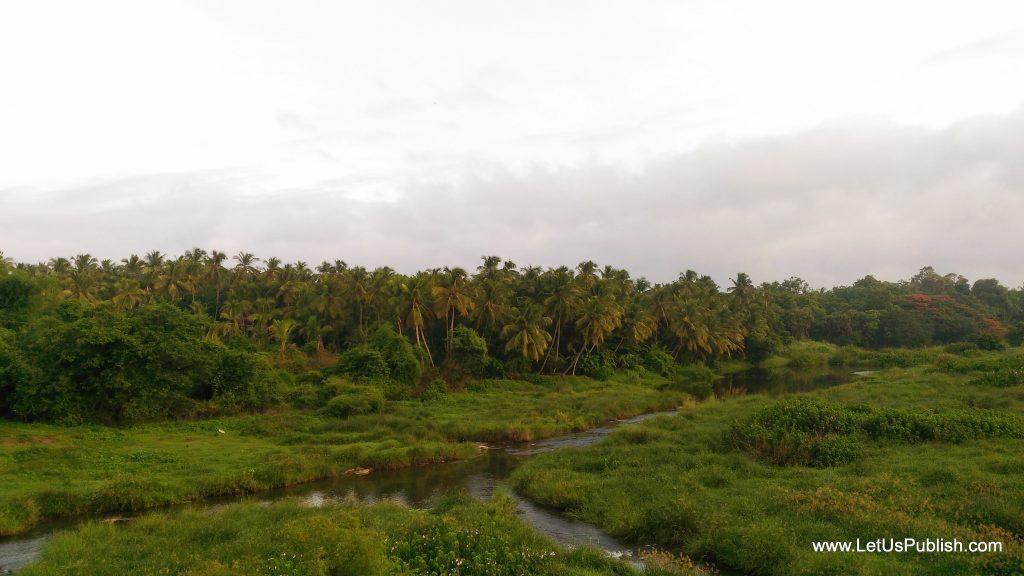 Cocunut tree Farms Kerala Beautiful Pics