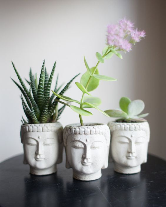 Home decor ideas for single women- plants for living room