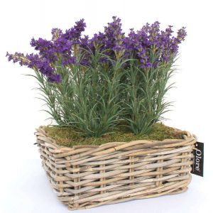 indoor-plants-gift-ideas-for-diwali
