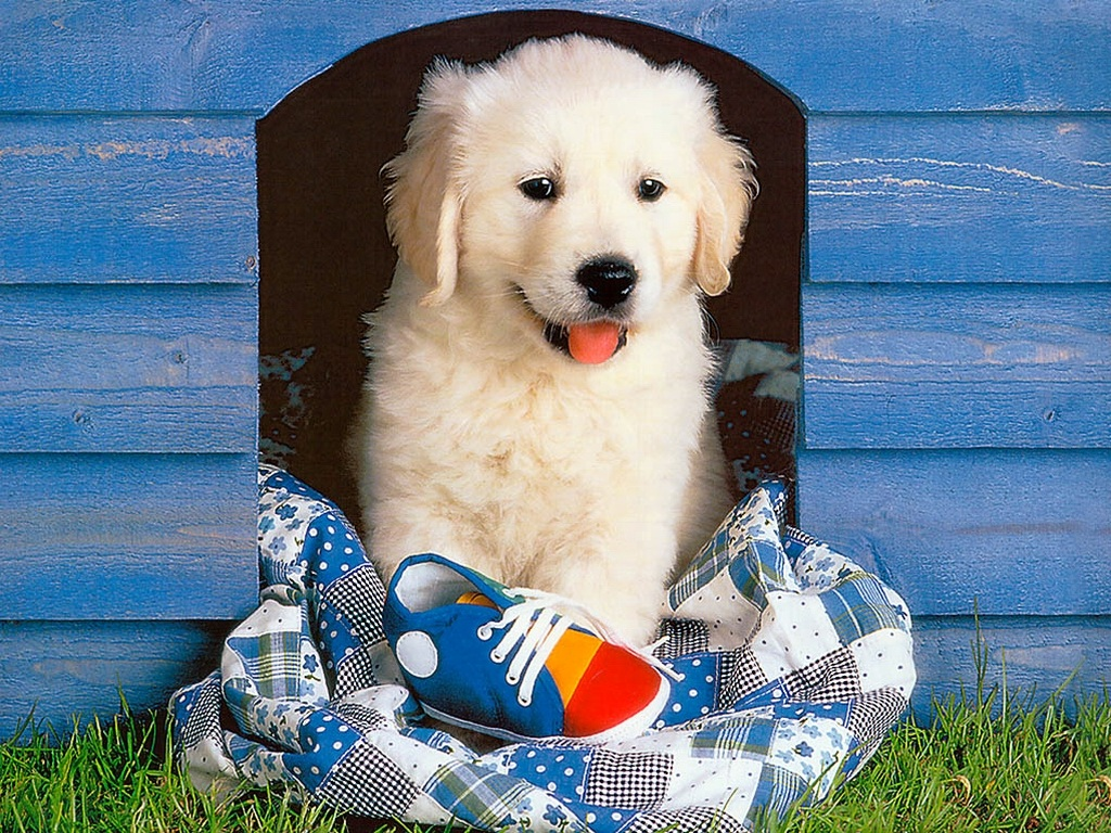 Cute Puppy Wallpapers Those Are Perfect To Make Your Mood Happy Let Us Publish