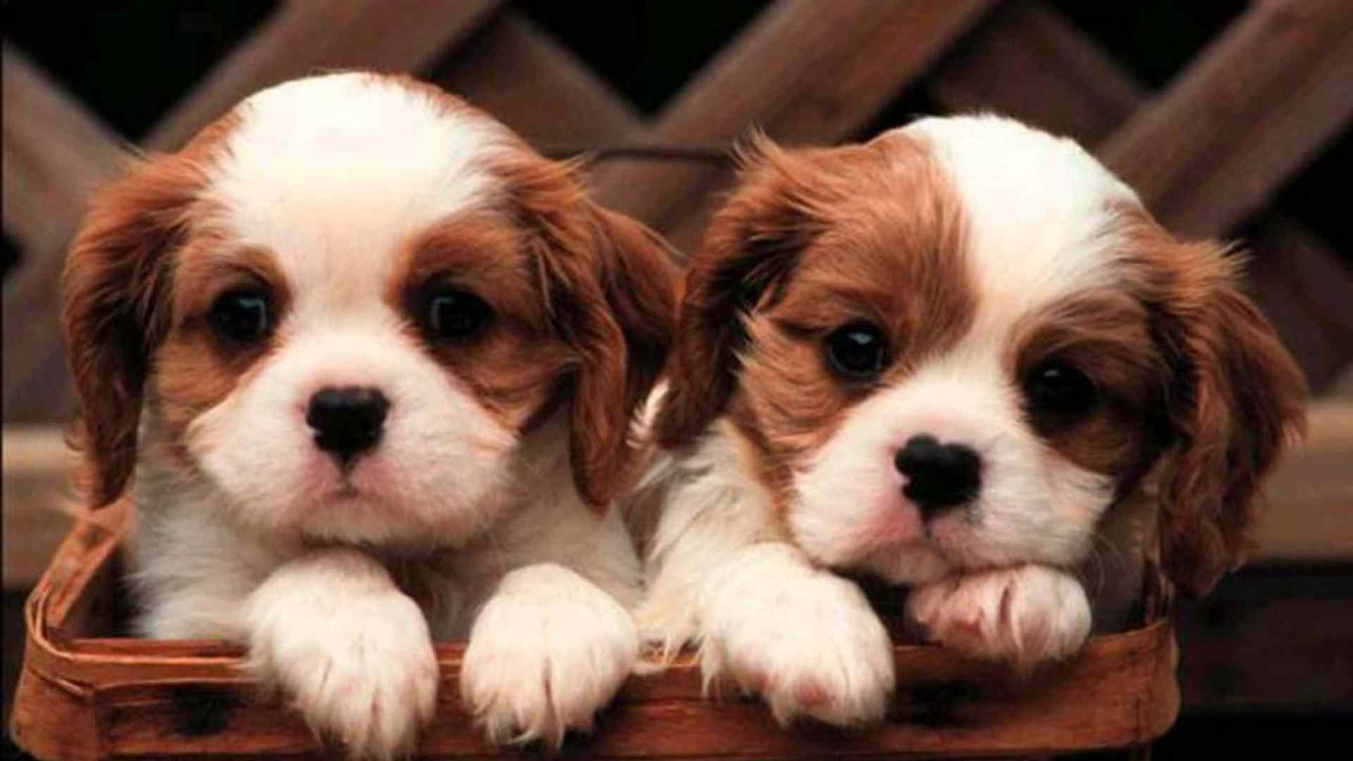 Cute Puppy Wallpapers Those Are Perfect To Make Your Mood Happy