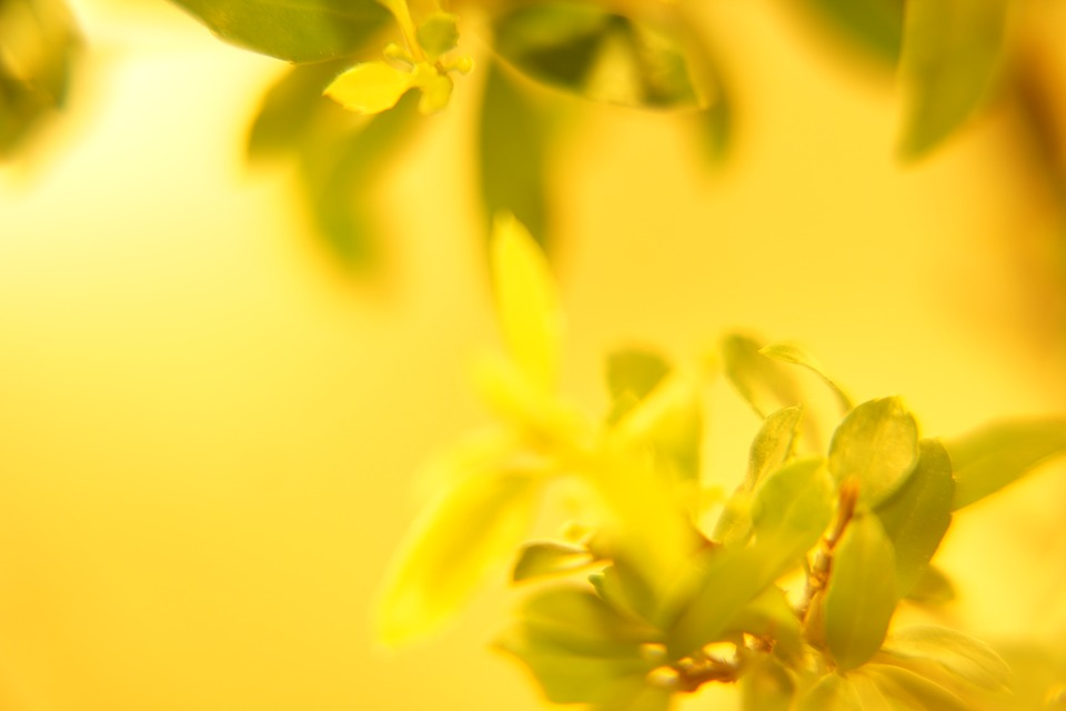 Best yellow HD wallpapers