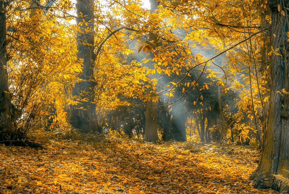 Beautiful Yellow Hd Wallpapers To Download Now Let Us Publish