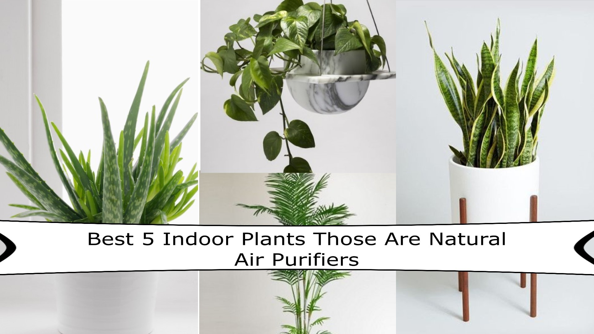 Natural Air Purifiers Lifestyle
